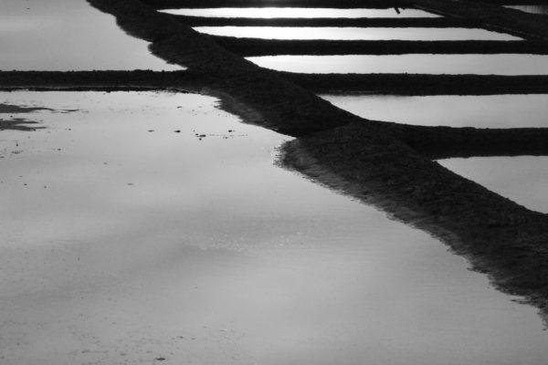Marais - ÎLe de Ré - noir et blanc